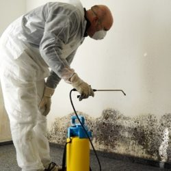 Professional-Mold-Removal-in-a-house